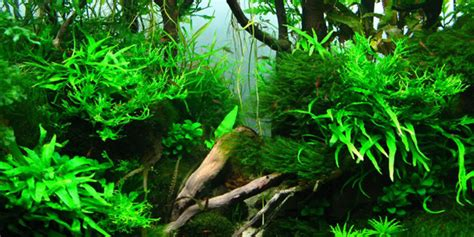style aquascape understanding jungle aquascaping style the aquarium guide