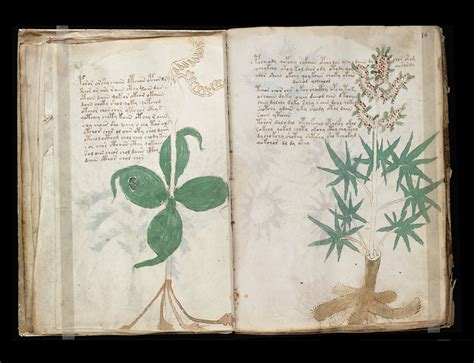 Beinecke Rare Book And Manuscript Library by Svelati I Primi Segreti Del Manoscritto Voynich Wired