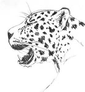 Drawings Of Jaguars Jaguar Sketch By Ward