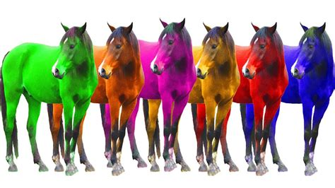 colorful horses colorful domestic animals with colours horses for children