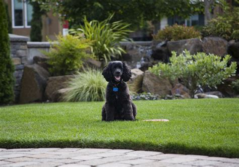 dog in the backyard custom landscaping landscaping ideas for backyards with dogs