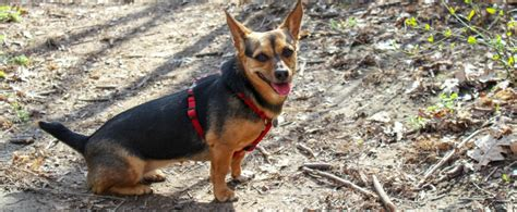 Entscheidungshilfe für einen Hund aus dem Tierheim THE