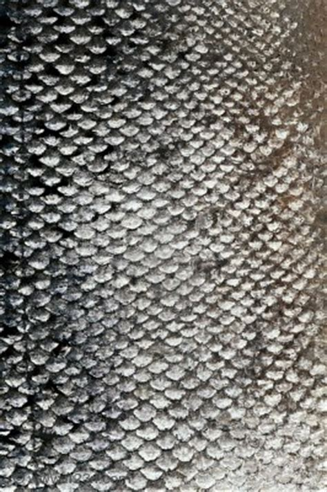 fish scale pattern photoshop images fish scale