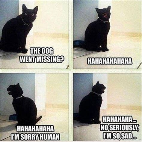 Funny Black Cat Memes - the 60 all time best funny animal pictures with captions