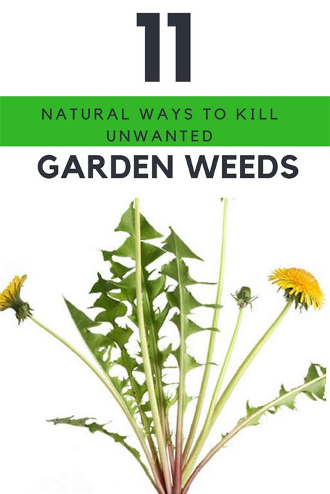 how to kill weeds in a vegetable garden garden killers 11 ways to get rid of weeds