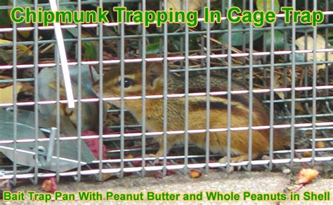 how to get a chipmunk out of your house how to get a chipmunk out of your house 28 images keeping chipmunks out of a