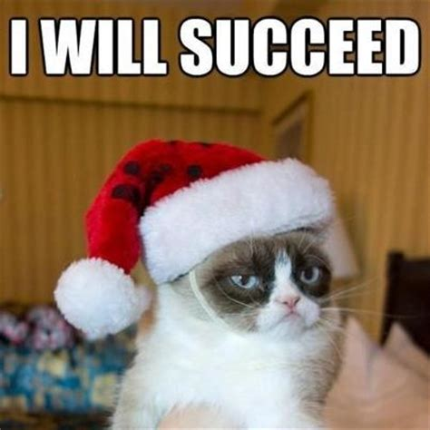 christmas cat memes 25 grumpy cat meme pictures and photos