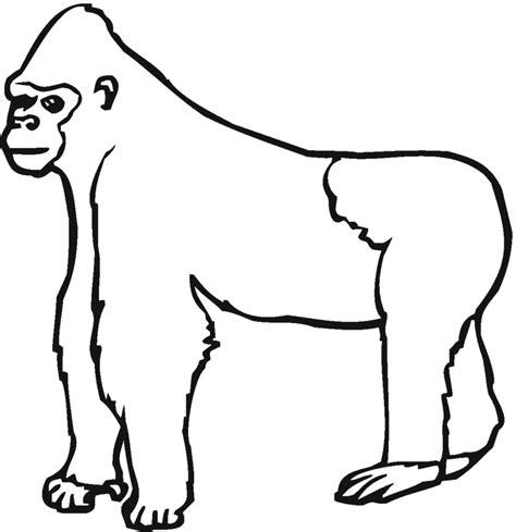 coloring page of gorilla gorilla clipart black and white clipartion com