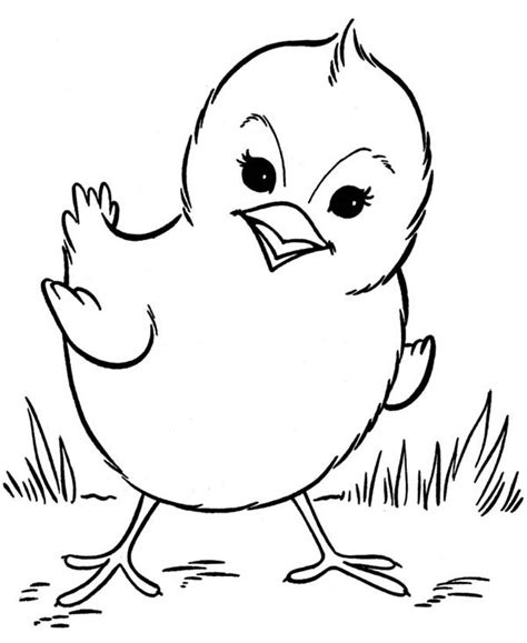 beautiful baby chick posing coloring page kids play color