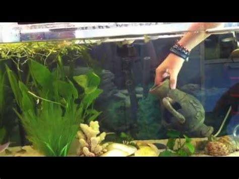 Anleitung: Putzen und Reinigen vom Aquarium   Wasserbecken