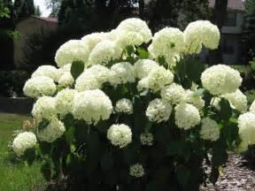 summer flower summer perennial flowers