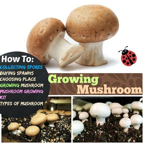 growing mushrooms 4 stages of growing mushroom