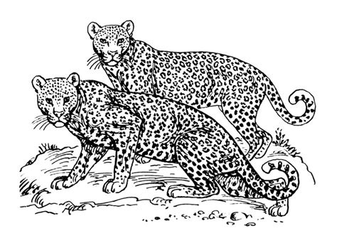 jaguar cat coloring page ausmalbild leopard ausmalbilder f 252 r kinder zeichnung