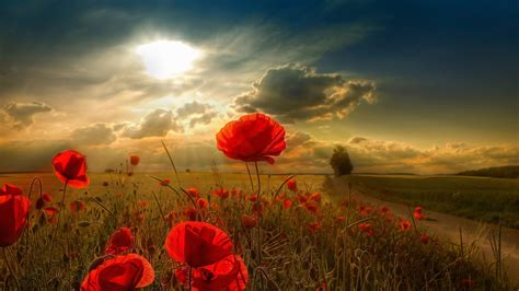 flowers sky nature light plant bloom hd wallpapers flowers scenery free wallpaper world part 2