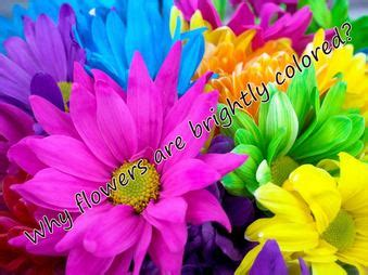 why are flowers brightly colored why flowers are brightly colored amazing why s