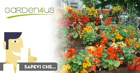 fiori a settembre i fiori di settembre garden4us