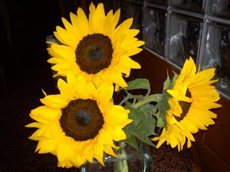 imagenes flores reales colores reales amarillo girasol el blog de tejeme