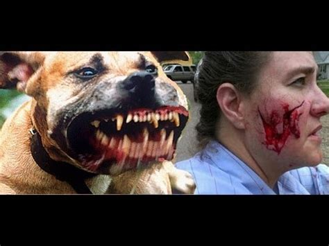 the hammer why dogs attack us and how to prevent it books should ownership of dangerous breeds of dogs be banned