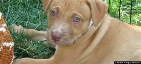 lifeline puppy rescue lifeline puppy rescue saves puppies from euthanasia every week helps them
