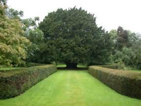 royal botanic garden edinburgh yew conservation hedge