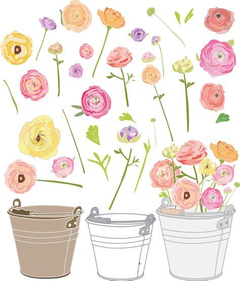 garden clip ranunculus vector garden clip