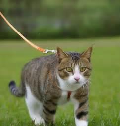 portare il al guinzaglio i gatti al guinzaglio