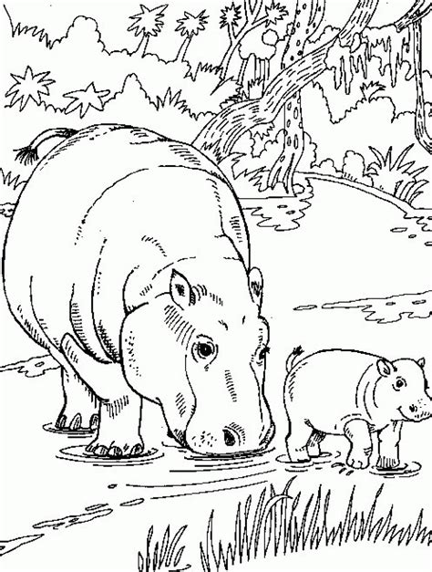 free printable hippo coloring pages for kids