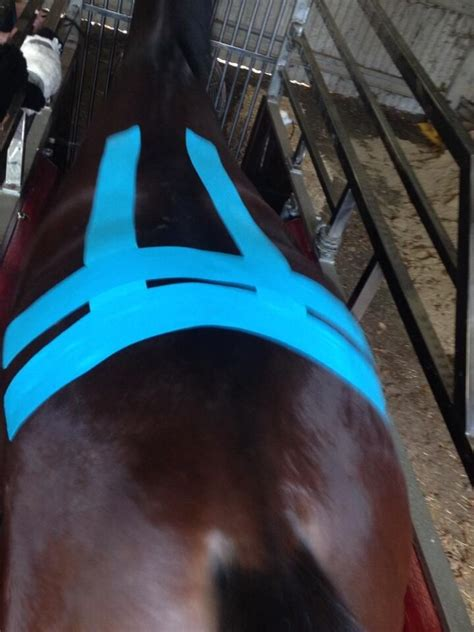 pics  equine kinesiology taping  horses