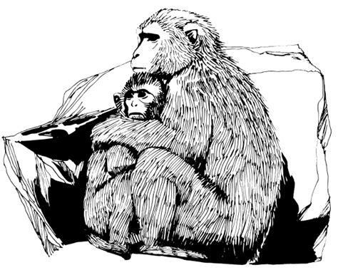 japanese macaque coloring page macaque drawing animals primates macaque macaque