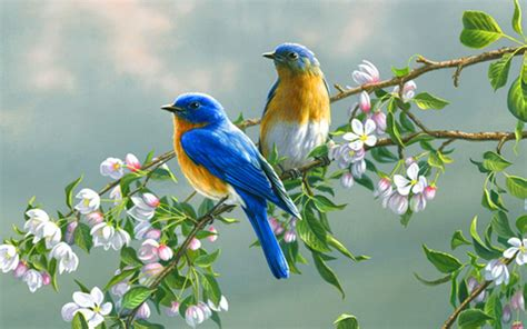 doves hd wallpaper 557370 jpg wallpaper birds and flowers 61 images