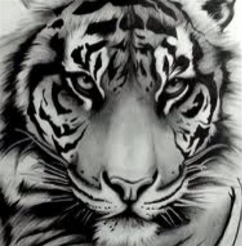 harimau related keywords harimau keywords keywordsking