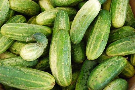 armenian cucumbers mercer island farmers market