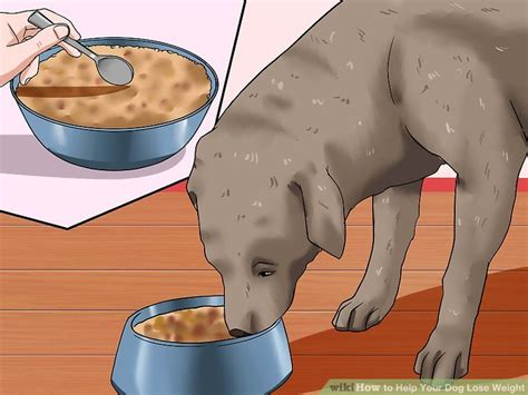how to help your lose weight how to help your lose weight with pictures wikihow autos post