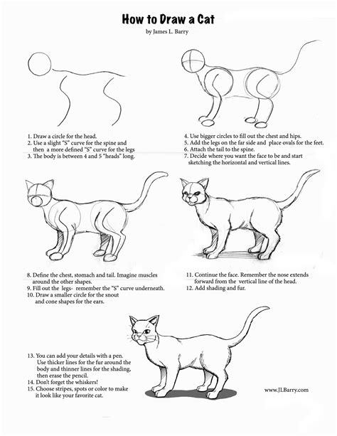 cat step step how to draw a cat dr