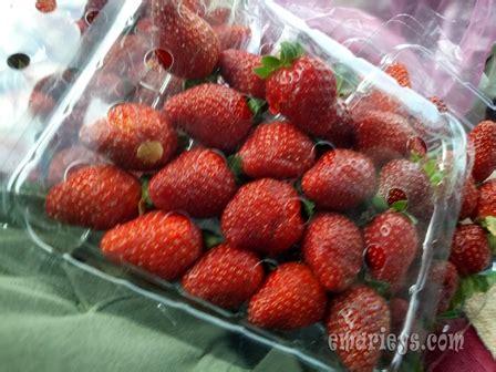 Payung Anak Corak Buah Strawberry harga buah strawberry menjunam ketika bulan ramadhan