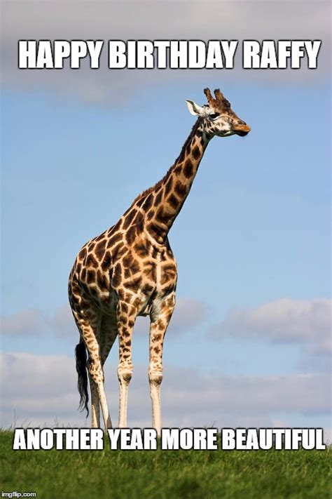 Giraffe Birthday Meme - giraffe imgflip