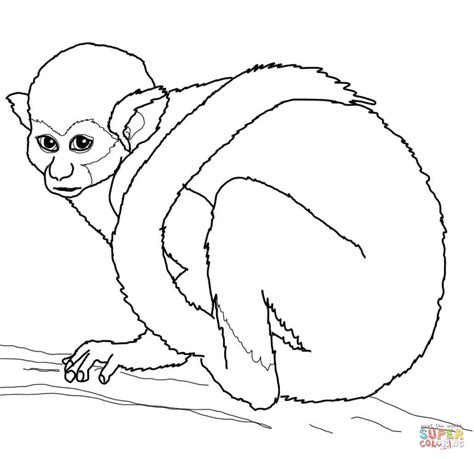 Squirrel Monkey Coloring Pages | squirrel monkey coloring page free printable coloring pages