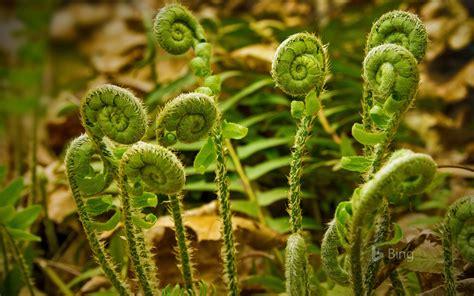 fiddlehead fern and morel mushroom pasta veggie belly