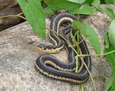 story   brother   danger  garden snakes