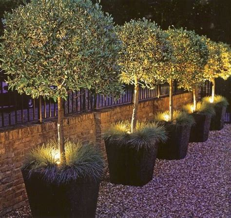 landscape lighting in planters love this outdoor