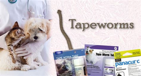 symptoms of tapeworm in dogs tapeworm symptoms images