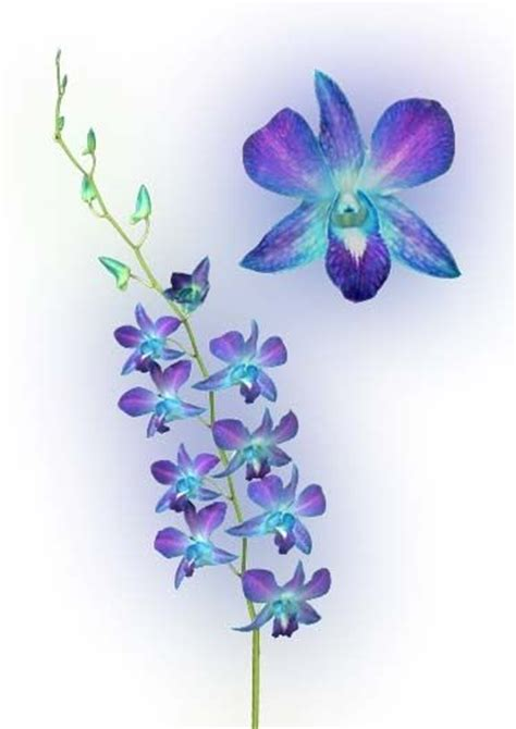purple orchid tattoo designs 1000 ideas about orchid on tattoos