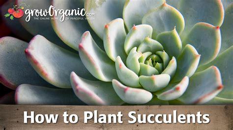 plant succulents youtube