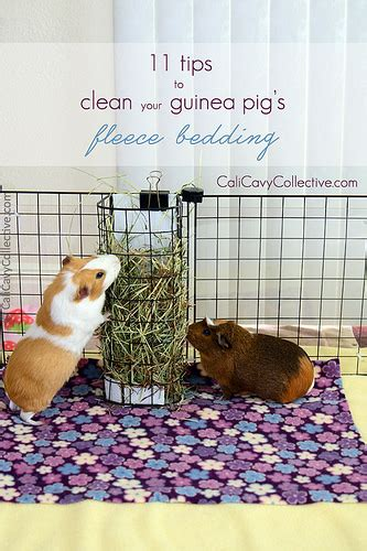 guinea pig fleece bedding cali cavy collective a blog about all things guinea pig 11 tips to spotless fleece
