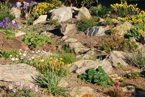 Simple Wild Ginger Rock Garden The Island And The Tree Desert Rock Garden Ideas