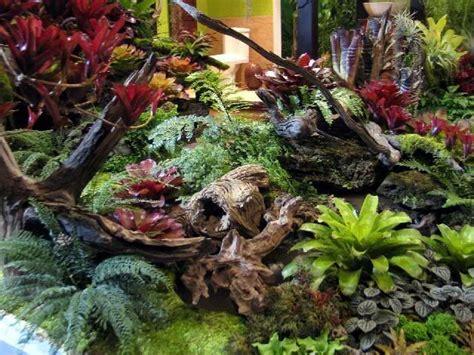 bromeliad garden images  pinterest tropical