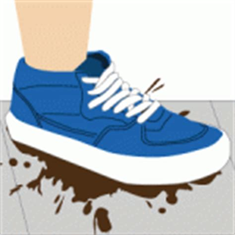 what to do when a dog poops in the house what to do when you step in dog poop