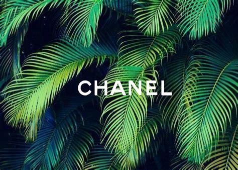 tumblr wallpaper tropical aurora