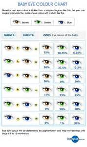 eye color probability chart eye color probability 1 kenneth