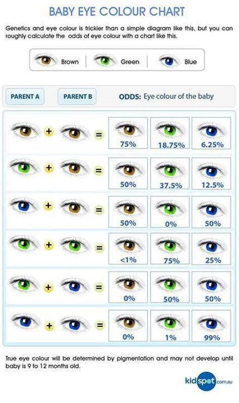 eye color probability eye color probability 1 kenneth